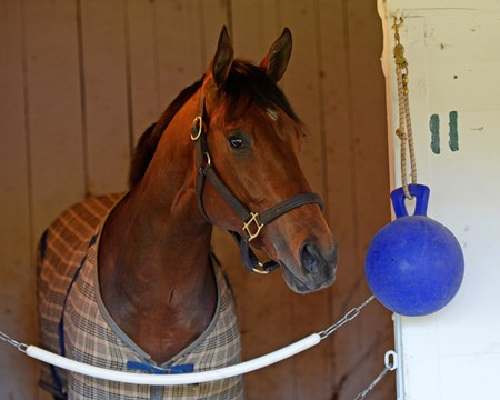 Caption: Tencendur in his stall