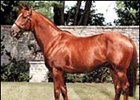 Woodman, sire of 75 stakes winners.