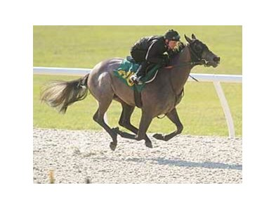 An Exchange Rate filly was the fastest worker at an eighth of a mile, going :9 4/5, March 10 at the OBS under tack show.