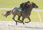 Hip 276; filly, Exchange Rate  --  Disperse a Star by Disperal, worked an eighth in :9 4/5 on March 10.