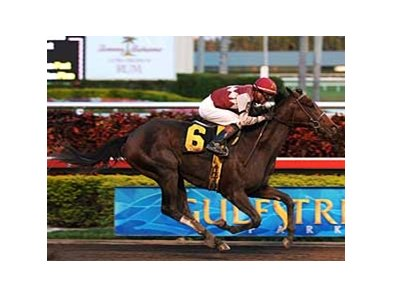 Theregoesjojo beat Quality Road in a January allowance race at Gulfstream Park.