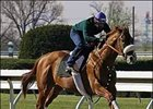 Cobalt Blue, San Felipe winner, breezing Friday at Keeneland.