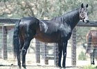 California Sire Bertrando Pensioned