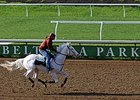 Takemetohollywood, a rare white Thoroughbred, gallops at Belterra Park.