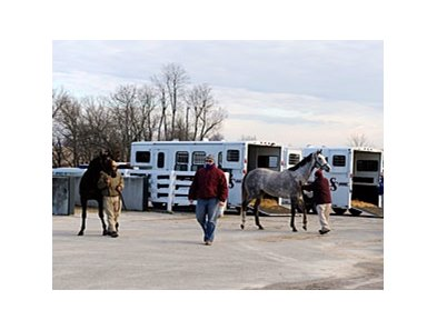 Horses arrive for Keeneland's January horses of all ages sale.
