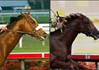 Unbeatens Barbaro (left) and Strong Contender holding ground in future pool.