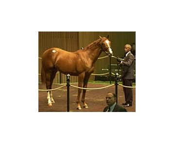 Demi O'Byrne paid a September sale record of $6.8 million for this Storm Cat colt at last year's Keeneland sale.