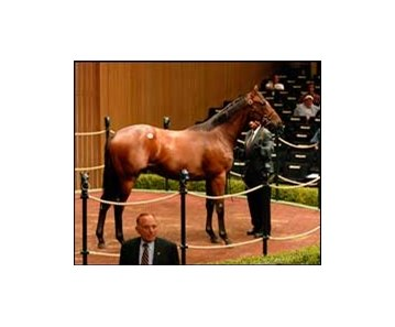 $750,000 colt; El Prado - Favorite Funtime by Seeking the Gold.