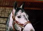 1998 Horse of the Year Skip Away, whose dam, Ingot Way, died March 27.