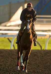 Imperial Monarch stretching his legs at Woodbine on October 11.