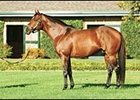 Victory Gallop, leading second crop sire.