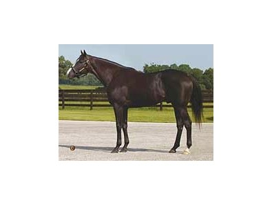 Repent is one of three stallions moving to Vinery's Florida operation.