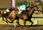 "Zenyatta remained perfect with her win in the Lady's Secret.<br><a target=""blank"" href=""http://www.bloodhorse.com/horse-racing/photo-store?ref=http%3A%2F%2Fpictopia.com%2Fperl%2Fgal%3Fprovider_id%3D368%26ptp_photo_id%3D8942252%26ref%3Dstory"">Order This Photo</a>"