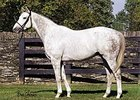 Tapit Colt Wins at Churchill
