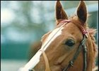 English Star Filly Pebbles Dead