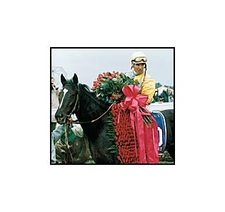 Sunday Silence after winning the 1989 Kentucky Derby.