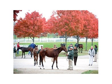Keeneland November Sale.