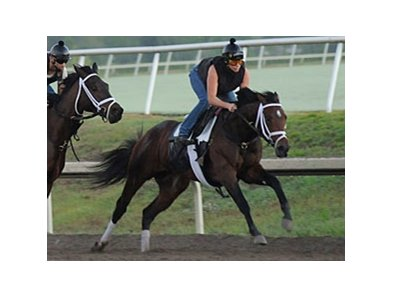 "Stay Thirsty has been preparing for his 2011 debut at Palm Meadows.<br><a target=""blank"" href=""http://www.bloodhorse.com/horse-racing/photo-store?ref=http%3A%2F%2Fpictopia.com%2Fperl%2Fgal%3Fprovider_id%3D368%26ptp_photo_id%3D9424847%26ref%3Dstory"">Order This Photo</a>"