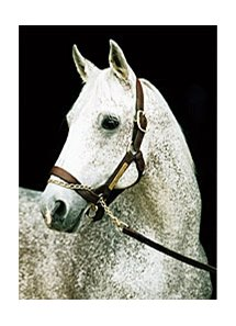 Deceased stallion Spectacular Bid.
