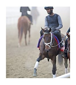 "Spring in the Air <br><a target=""blank"" href=""http://photos.bloodhorse.com/BreedersCup/2012-Breeders-Cup/Works/26130247_gxH6nS#!i=2187330908&k=gPBfXFw"">Order This Photo</a>"