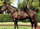 From 752 racing age foals, Dynaformer has 42 stakes winners as a maternal grandsire.