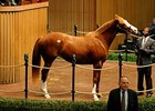 Gwen's Song, (Unbridled's Song - Gwenjinsky by Seattle Dancer) in foal to Distorted Humor, brings $1.5 Million.