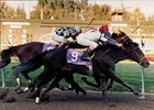 Cryptoclearance won or placed in 21 graded stakes, including victory in the 1987 Florida Derby.