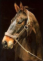 Champion Our Mims Dead at Age 29