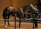 Dance Quietly, hip 92, sold at the Keeneland November Sale for $2 Million dollars.