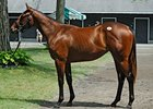 Hot Bernardini is Sire of Top Saratoga Filly