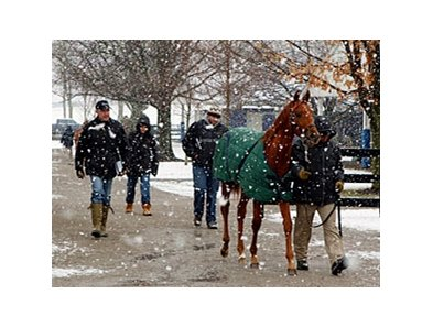 Fasig-Tipton Kentucky Winter Sale.