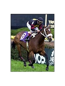 Perfect Sting, Jerry Bailey up, wins the Breeders' Cup Filly & Mare Turf.