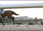A horse works over the Polytrack surface at Turfway Park.