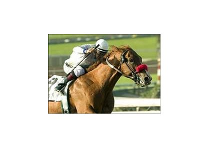 "Cobalt Blue, winning the San Felipe, returns to competition in Saturday's Alydar Stakes at Hollywood Park.<br><a target=""blank"" href=""http://www.bloodhorse.com/horse-racing/photo-store?ref=http%3A%2F%2Fpictopia.com%2Fperl%2Fgal%3Fprovider_id%3D368%26ptp_photo_id%3D896187%26ref%3Dstory"">Order This Photo</a>"