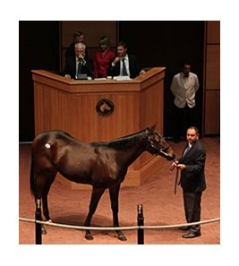 Hip #991, a son of Indian Charlie was purchased for $250,000 during the final session of the Fasig-Tipton October yearling sale.
