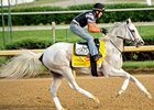 "Hansen<br><a target=""blank"" href=""http://photos.bloodhorse.com/TripleCrown/2012-Triple-Crown/Works/22611108_LR3wcn#!i=1827085186&k=28Skv66"">Order This Photo</a>"
