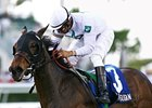 Sharp Susan Heads Violet Handicap Field