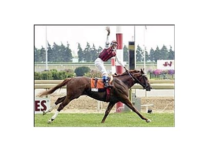 Canadian Triple Crown winner Wando set to contest Sunday's Atto Mile at Woodbine.