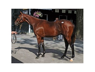 Hip #114, colt; Bernardini -- Easter Bunnette by Carson City, brought $1.2 million during the second session of the Fasig-Tipton Saratoga Select yearling sale.