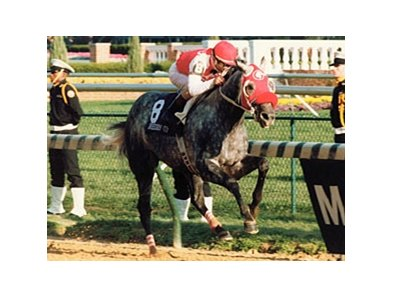 "Black Tie Affair won the Breeders' Cup Classic in 1991, and was named Horse of the Year that year.<br><a target=""blank"" href=""http://www.bloodhorse.com/horse-racing/photo-store?ref=http%3A%2F%2Fpictopia.com%2Fperl%2Fgal%3Fprovider_id%3D368%26ptp_photo_id%3D8581817%26ref%3Dstory"">Order This Photo</a>"