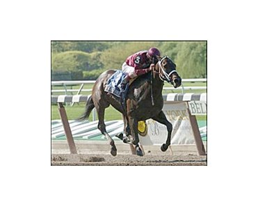 Nassau County BC Stakes winner Bending Strings retired in foal to Distorted Humor.