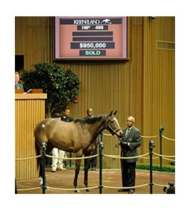 Hip #499; Bon Jovi Girl (Malibu Moon - Chipeta Springs by Alydar) brought $950,000 on Day 2 of the Keeneland January horses of all ages sale.