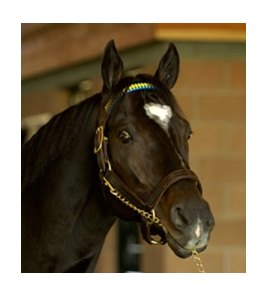 Medaglia d'Oro will have a 2010 fee of $100,000.