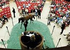 Fasig-Tipton yearling sales at Saratoga.