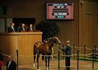 A.P. Indy's Keeneland day 1 sales topper, a filly which sold for $3.1 million.