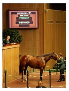 Hip #1014; Danceinthesunlight (A. P. Indy - Dancethruthedawn by Mr. Prospector), brought $675,000 to top Day 4 at the 2008 Keeneland November breeding stock sale.