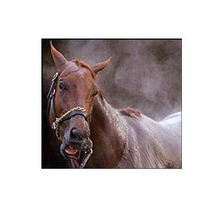 Belmont Stakes favorite Funny Cide.