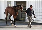 Barbaro is walked by Dr. Dean Richardson at the New Bolton Center Wednesday.