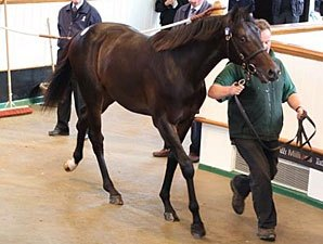 Galileo Colt Tops Day 1 of Tattersalls Sale
