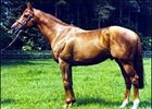 Champion Runner and Sire Kris Dead at 28